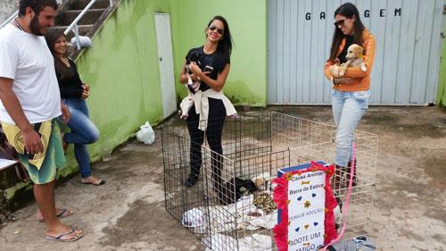 Os animais que são retirados das ruas e de condições de maus tratos, são cuidados e colocados para doação.