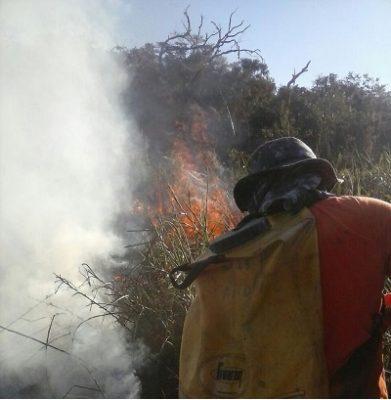 Brigadistas tentam por terra conter as chamas, mas como o local é de difícil acesso uma aeronave foi solicitada.